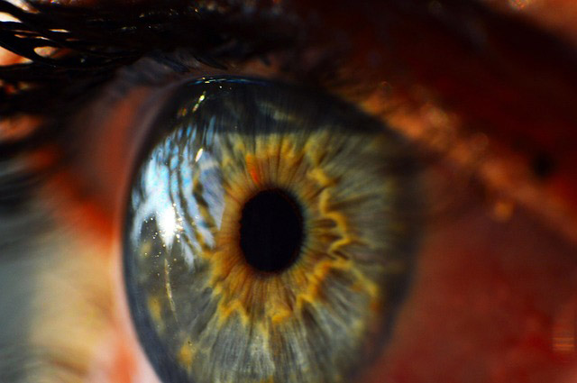 Detail of the human eye